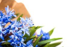 Blue flower in bouquet Stock Photo