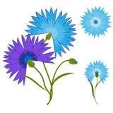 Blue flower cornflower isolated on white background. Cartoon  centaurea cyanus illustration. Blue flower cornflower isolated on white background. Cartoon Royalty Free Stock Images