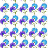 Blue flower cornflower isolated on white background. Cartoon  centaurea cyanus illustration. Seamless pattern with blue flower cornflower isolated on white Stock Image