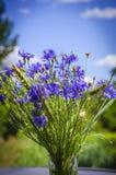 Blue flower cornflower Royalty Free Stock Photography