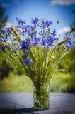 Blue flower cornflower Royalty Free Stock Image