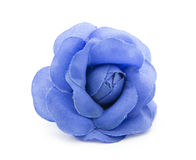 Blue flower Royalty Free Stock Photography
