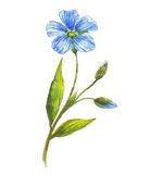 Blue flower of flax Stock Photography