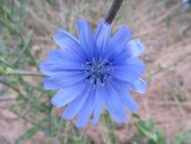 Blue, Flower, Flora, Plant stock images