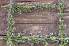Blue flower frame on wooden background royalty free stock photo