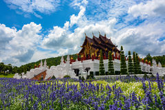 Blue flower gardens in front of the pavilion at Royal Park Rajapruek in Chiang Mai, Thailand Royalty Free Stock Images