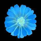 Blue flower glow in the dark Stock Photo