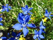 Blue flower in the grass on the meadow Stock Image