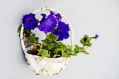 Blue flower hanged in basket Royalty Free Stock Photos