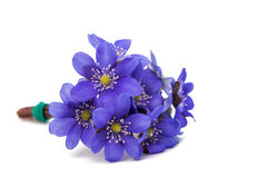 Blue flower isolated Royalty Free Stock Image