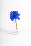 Blue flower in a jar Stock Photos