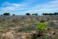 Blue flower landscape stock image