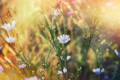 Blue flower in meadow lit by spring sunlight Stock Photos