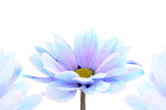 Blue flower over white Royalty Free Stock Images