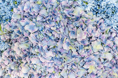 Blue flower petals Royalty Free Stock Photo