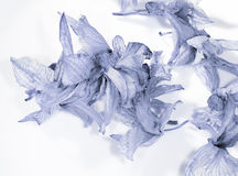 Blue flower petals Royalty Free Stock Photos
