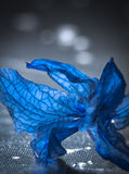 Blue Flower Petals. Blue translucent flower petals on a textured grey background Royalty Free Stock Photography