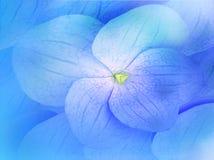 Blue flower petals Stock Photography