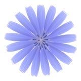 Blue flower Royalty Free Stock Image