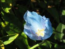 Blue, Flower, Plant, Flowering Plant stock photos