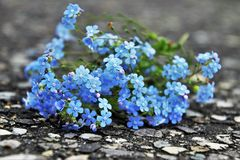 Blue, Flower, Plant, Flowering Plant royalty free stock photography