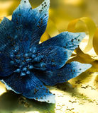 Blue flower poinsettia Stock Images