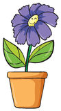 A blue flower and pot Royalty Free Stock Photo