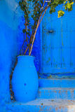 Blue flower pot. Located in front of blue door Royalty Free Stock Images