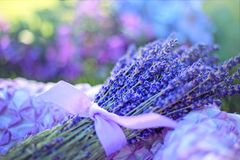 Blue, Flower, Purple, Lavender stock photos