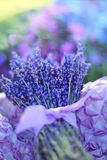 Blue, Flower, Purple, Violet royalty free stock photo
