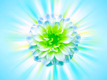 Blue flower with rays Stock Photo