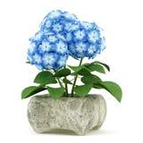 Blue flower in stone pot  on white Stock Image