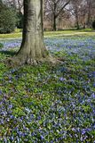 Blue flower tapestry in spring Stock Photo