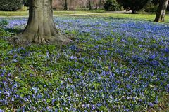 Blue flower tapestry in spring Stock Photos