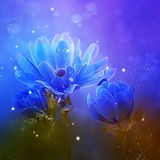 Blue, Flower, Water, Flora royalty free stock images