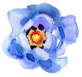 Blue flower. Watercolor painting. Beautiful watercolor flower stock image