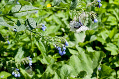 Blue flower and white butterfly on green Royalty Free Stock Images