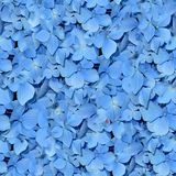 Blue Flowers. Seamless Texture Tile from Photographic Original Stock Images