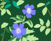 Blue Flowers. Two blue flowers with bright green leaves on a dark green Royalty Free Stock Image