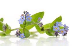 Blue flowers Stock Photo