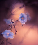 Blue flowers at abstract soft light Stock Photo