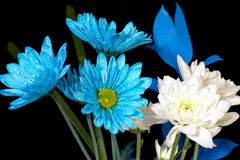Blue Flowers Against Black Royalty Free Stock Images