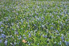 Blue flowers  background macro Stock Photo