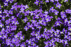 Blue flowers background Stock Photo