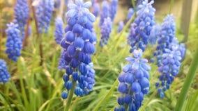 Blue flowers. Beatifull flowers in my garden Stock Image