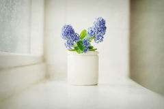 Blue flowers. Beautiful blue flowers in a small jar on a windowsill Royalty Free Stock Photography