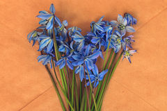 Blue flowers black background macro Royalty Free Stock Image