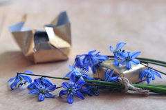 Blue flowers black background macro Royalty Free Stock Photo