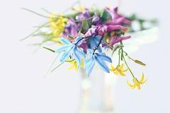 Blue flowers black background macro Royalty Free Stock Images
