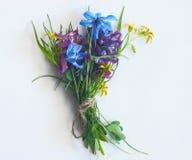 Blue flowers black background macro Stock Photo